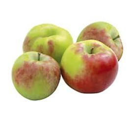Obuoliai, naujo derliaus